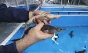 Ведущий Рыбовод рыбоводного хозяйства